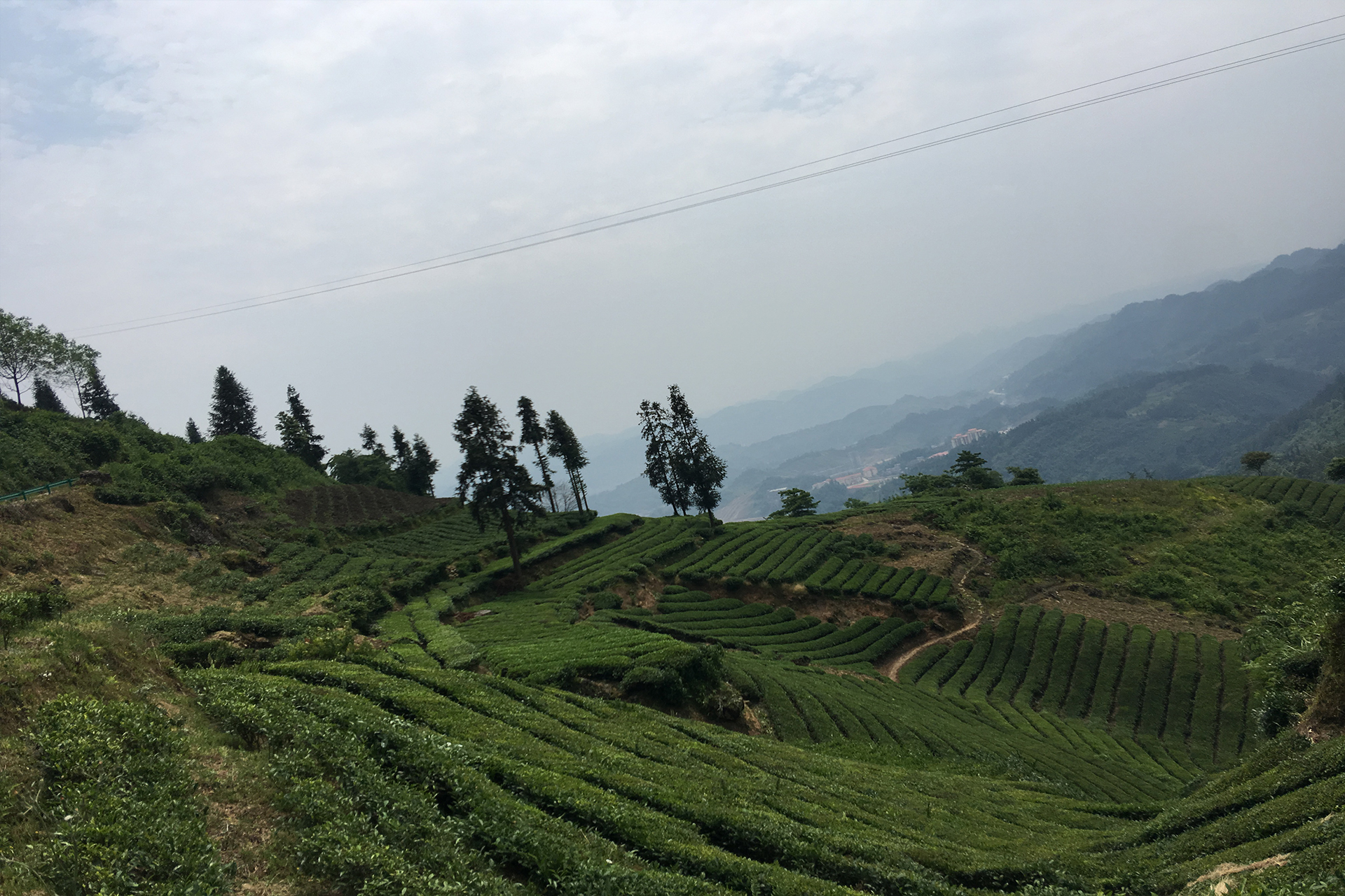 , Our Tea Story