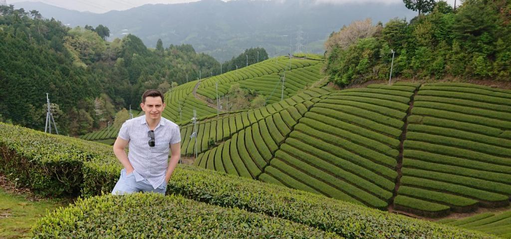 , Tea Fields of Kyoto